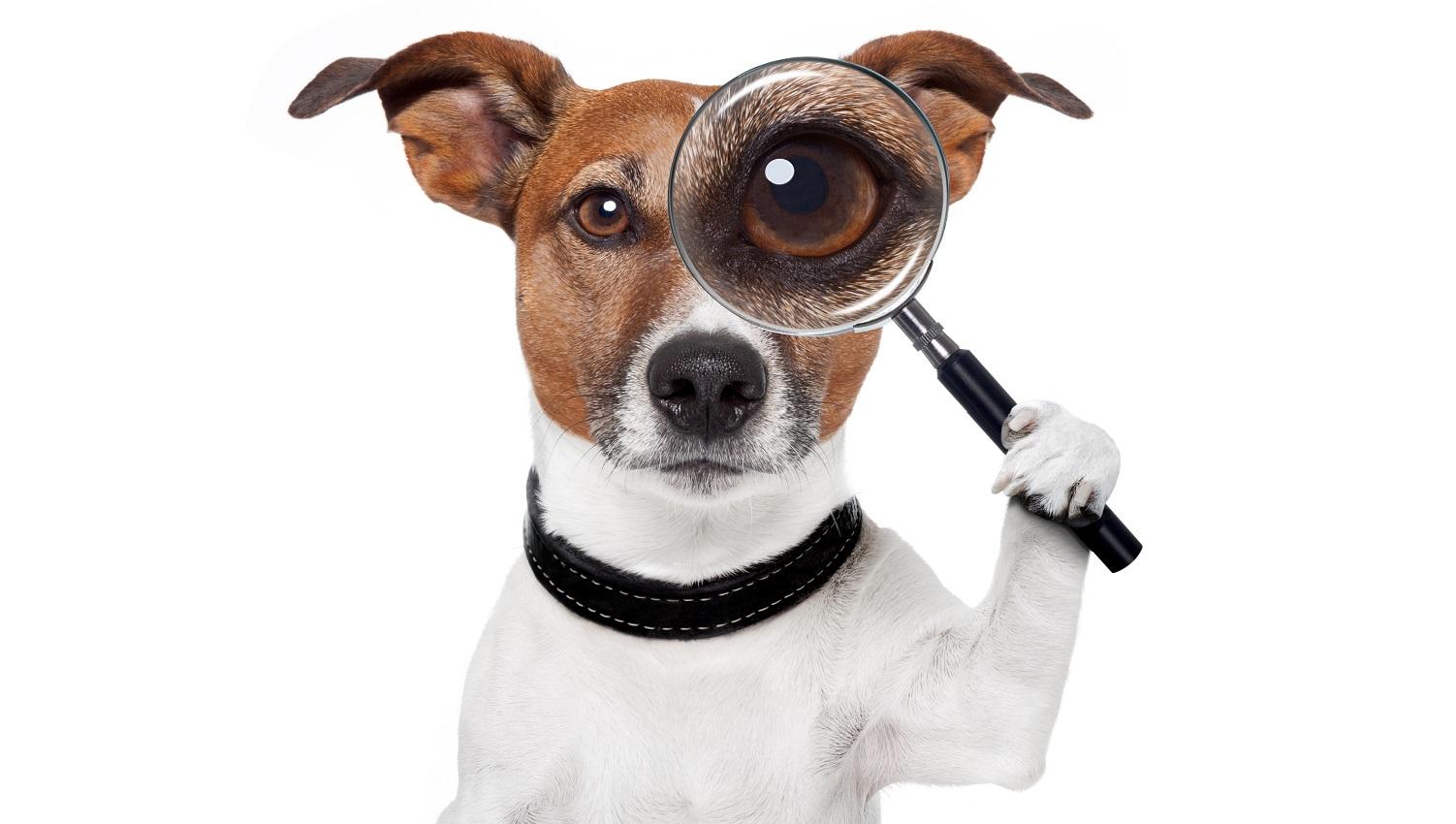 Property alert service