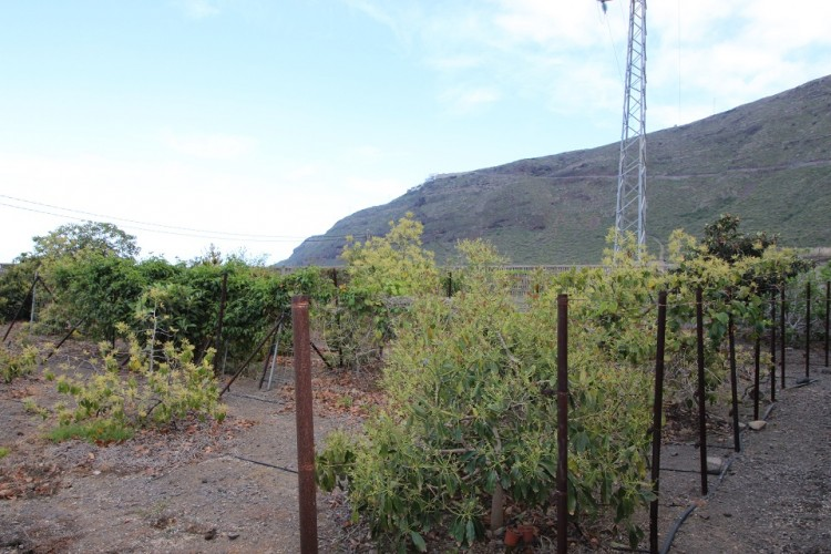 Camino Real La Ladera -  LLano Grande -